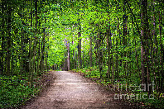 Hiking trail in green forest by Elena Elisseeva