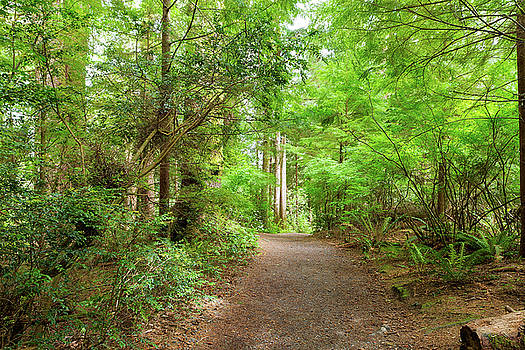 Hiking Trail through Forest along Lewis and Clark River by David Gn
