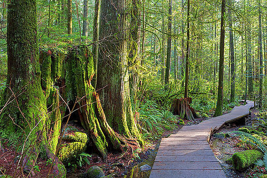 Hiking Trail Through Forest in Lynn Canyon Park by David Gn