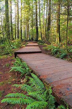 Hiking Trail Wood Walkway in Lynn Canyon Park by David Gn