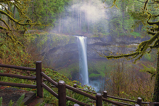 Hiking Trails at Silver Falls State Park by David Gn