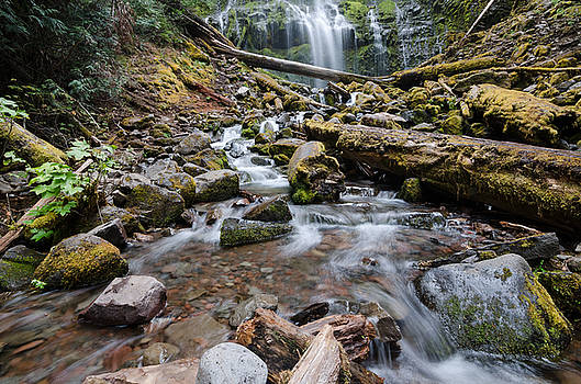 Margaret Pitcher - Hiking Zen Forests