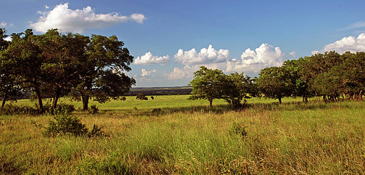 Hill Country Beauty by Bill Morgenstern