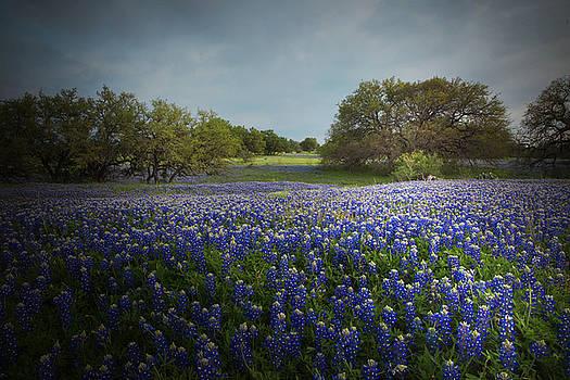 Susan Rovira - Hill Country Ranch