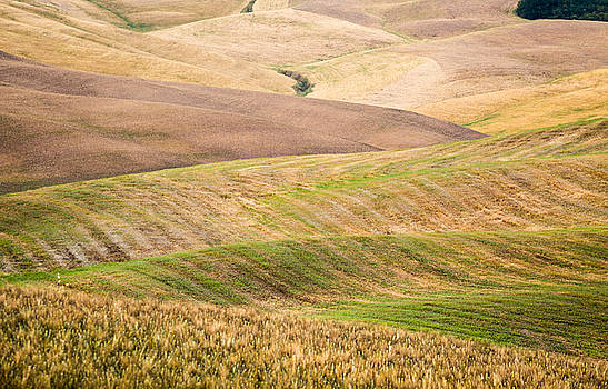Hills of Tuscany by Stefano Termanini