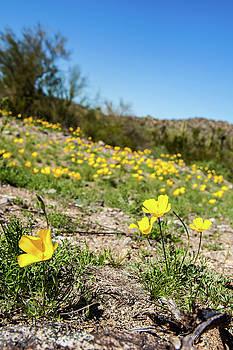Hillside Flowers by Ed Cilley
