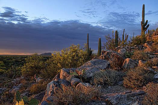 Hillside Light by Ryan Seek