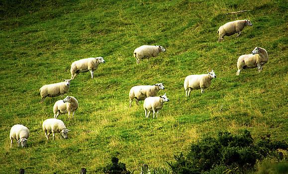 Mike Shaw - Hillside Pasture