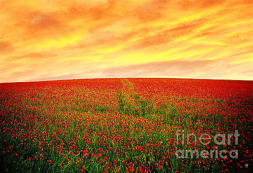 Hillside Poppy by Neil Finnemore
