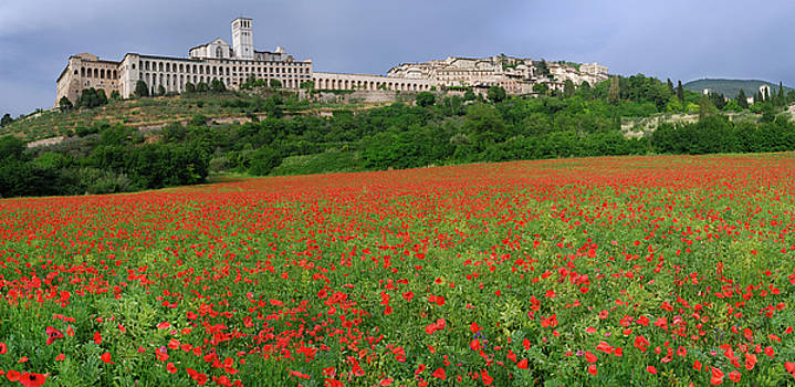 Reimar Gaertner - Hilltop city of Assisi with wildflower poppies in Umbria Italy