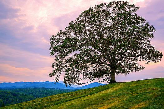 Hilltop Oak by Brian Shepard
