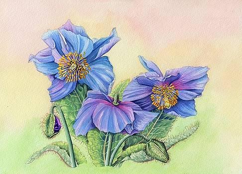 Himalayan Blue Poppy by Lynne Henderson