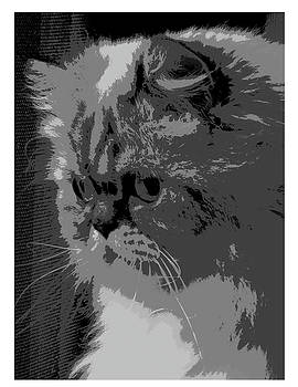 Himalayan cat by Patricia Frankel