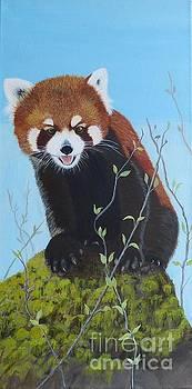Himalayan Red Panda by Alicia Fowler