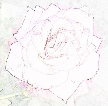 Hint of Peace Rose by Amy Jo Garner