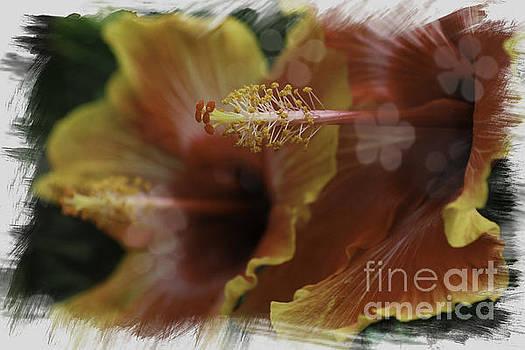 Hippi Hibiscus by Lori Mellen-Pagliaro
