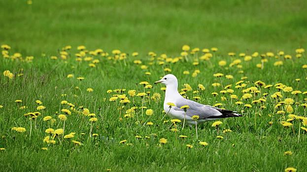Hippie gull flower power by Jouko Lehto