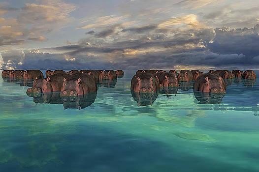 Hippos by Betsy Knapp