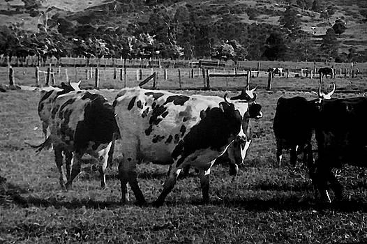 History Of Farming 1900s by Miroslava Jurcik