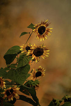 History of Sunflowers by Theresa Campbell