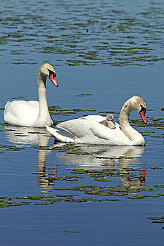 Debbie Oppermann - Hitching A Ride