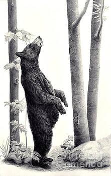 Hmmm...Black Bear in the Beechnut Grove by Susan Fraser SCA  B Sc