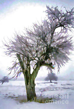 Hoar Frost in Old Orchard by Gordon Wood