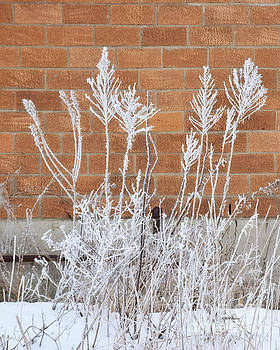 Hoar Frost by Kathy M Krause
