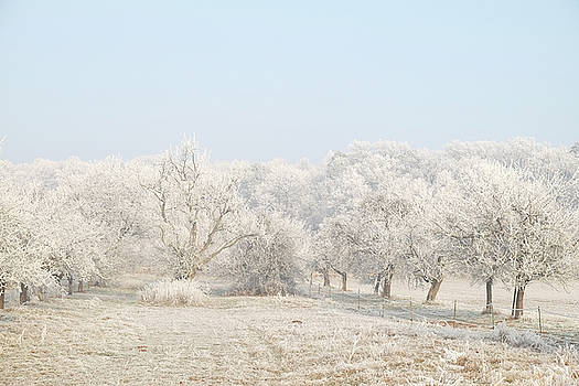 Martin Stankewitz - hoar frost on fruit trees, winter landscape