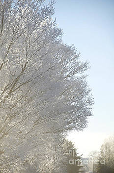 Elaine Mikkelstrup - Hoar Frost on Trees