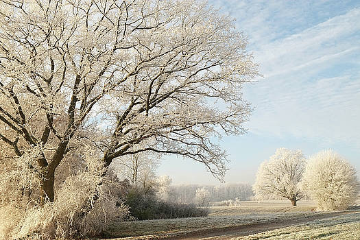 Martin Stankewitz - Hoar frost winter landscape with trees