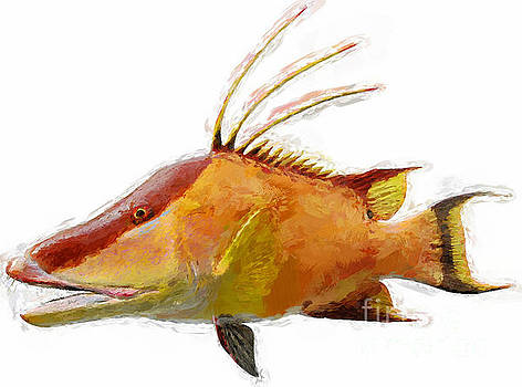 Hogfish by Jennifer Capo