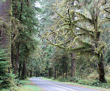 Hoh Rain forest Road by Rex E Ater