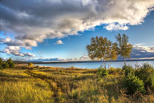 Birch trees and Path Lake Michigan Petoskey by J Thomas