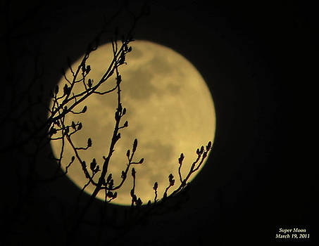 Holding Up The Super Moon by Sandi OReilly