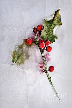 Holly 2 by Margie Hurwich