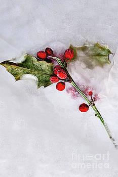 Holly 3 by Margie Hurwich