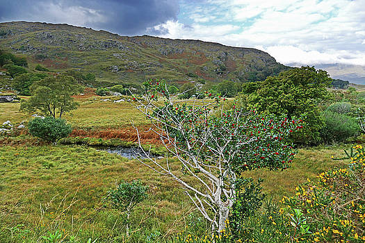 Holly and Gorse by Bill Jordan