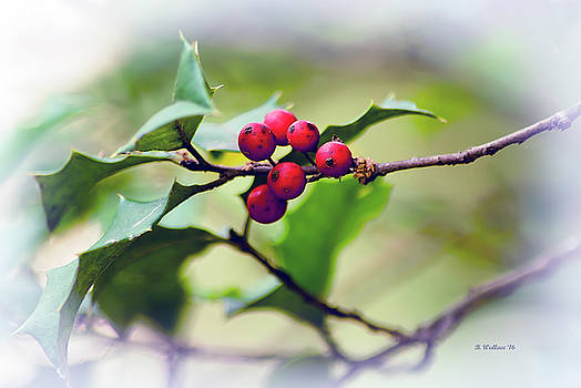 Holly Berries by Brian Wallace