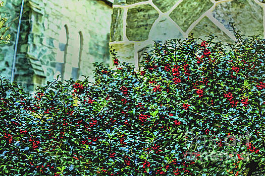 Sandy Moulder - Holly Bush in December at Church of the Holy Trinity
