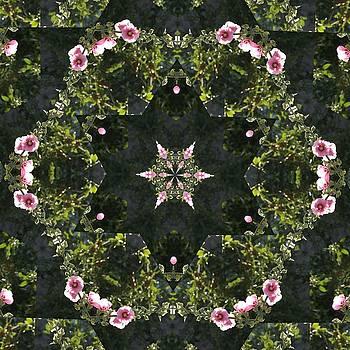 Valerie Kirkwood - Hollyhock Kaleidoscope