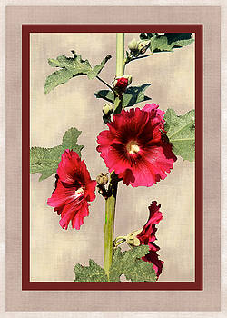 Hollyhock by Pederbeck Arte Gruppe