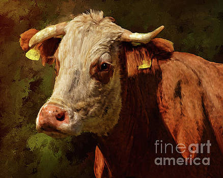 Holy Cow by Tara Richardson