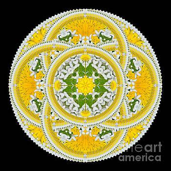 Homage to a Dandelion by Karen Jordan Allen