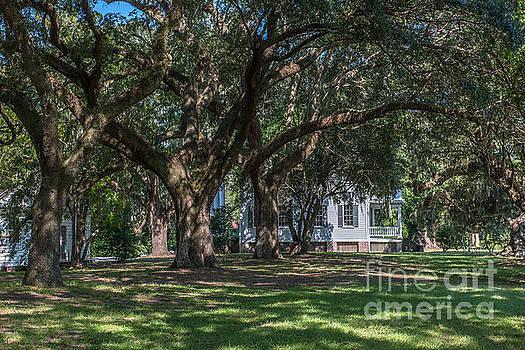Dale Powell - McLeod Home through the Oaks