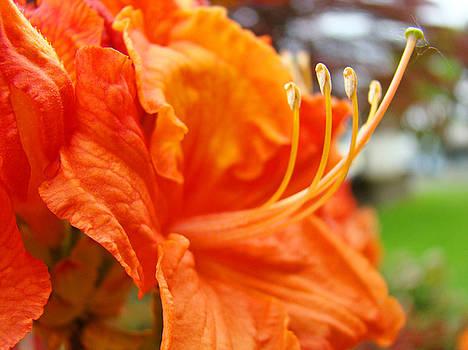 Baslee Troutman - HOME DECOR Orange RHODIE Flower Art Print Baslee Troutman
