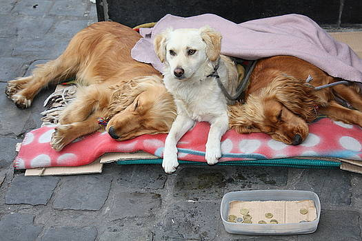 Homeless Dogs by Peter Gaffey