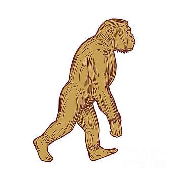 Homo Habilis Walking Side Drawing by Aloysius Patrimonio