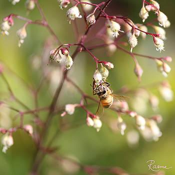 Rasma Bertz - Honey Acrobat