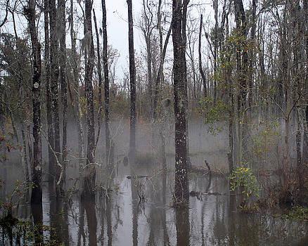 Honey Island Swamp by Benny Dupre